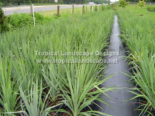 Semillas Sedum | 6 Sedums | Semillas de Planta Perenne